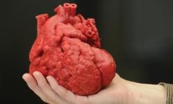 Cientistas usam impressora 3D para criar coração de silicone