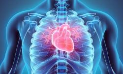 Máquina custeada pelo SUS substitui coração de paciente por 53h